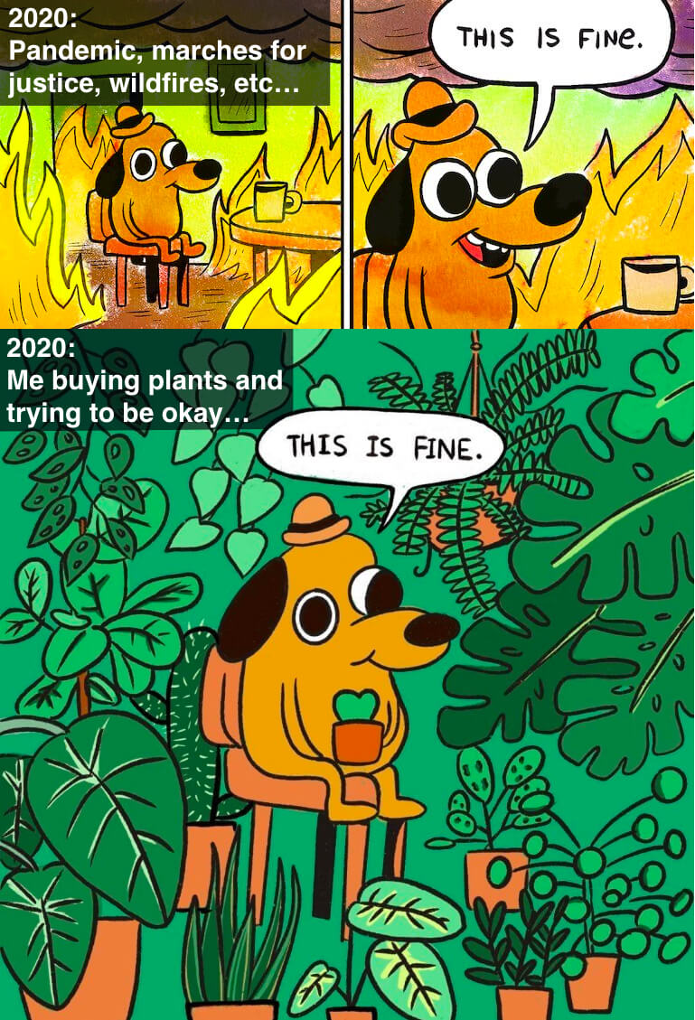 this-is-fine-plant-@2x